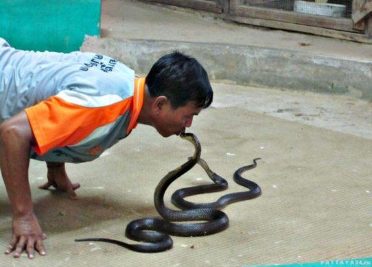 Фото змеи