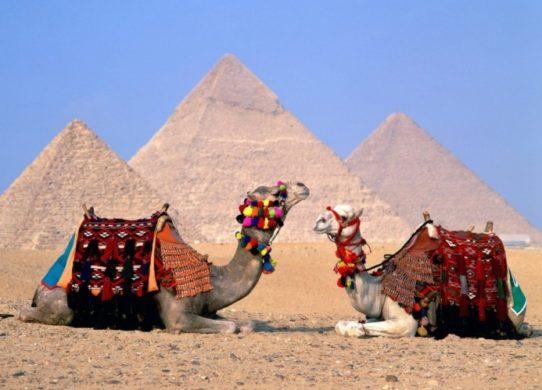 Фото верблюдов